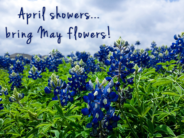 April Showeray Flowers Positivity And Looking Toward The Sunshine